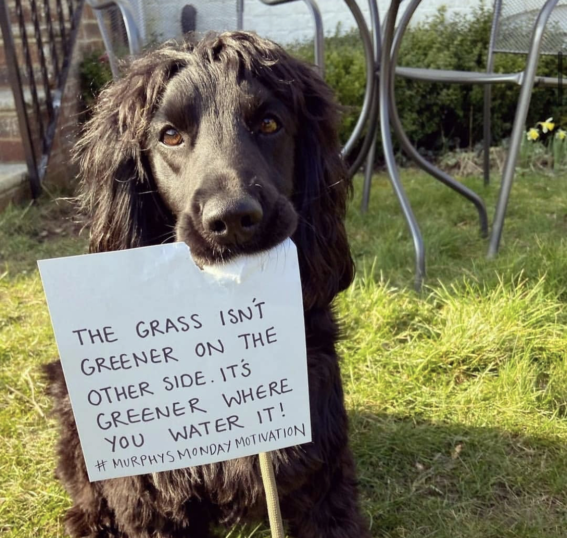 cute dog marine Saturday wellbeing mornings quote